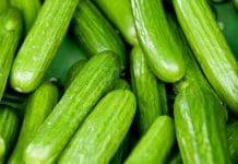 Cucumber farming in Nigeria