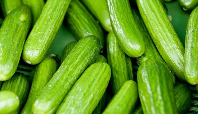 Cucumber farming in Nigeria