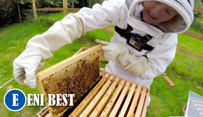 Honey Business in nigeria