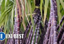 How To Start Sugarcane Farming Business In Nigeria