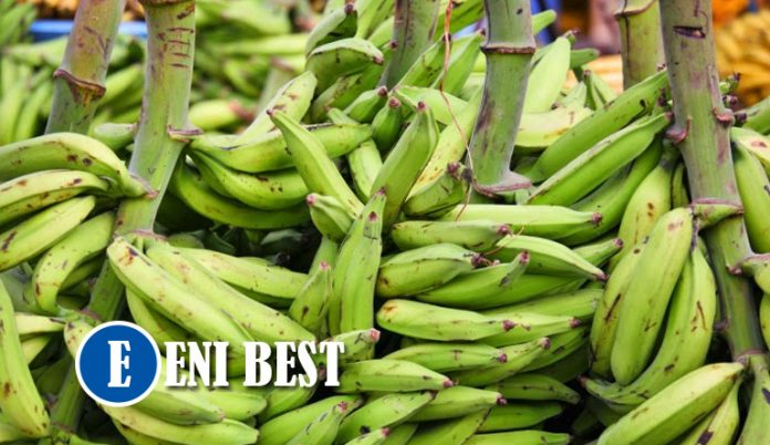 Farming business In Nigeria eni best