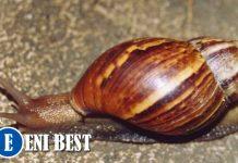 Snail Farming Business in nigeria