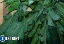 Ugu Farming Business in nigeria
