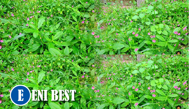 Vegetable Farming In Nigeria What You Should Know Eni Best