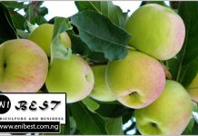 apple farming in nigeria