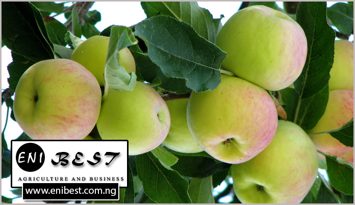 apple farming in nigeria, fruit farming