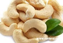 cashew nut business