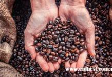 coffee farming eni best