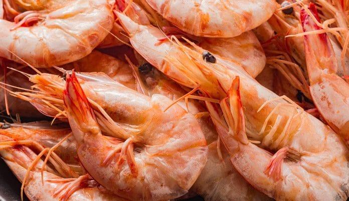 crayfish business