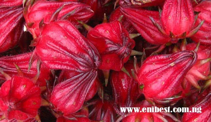 hibiscus farming
