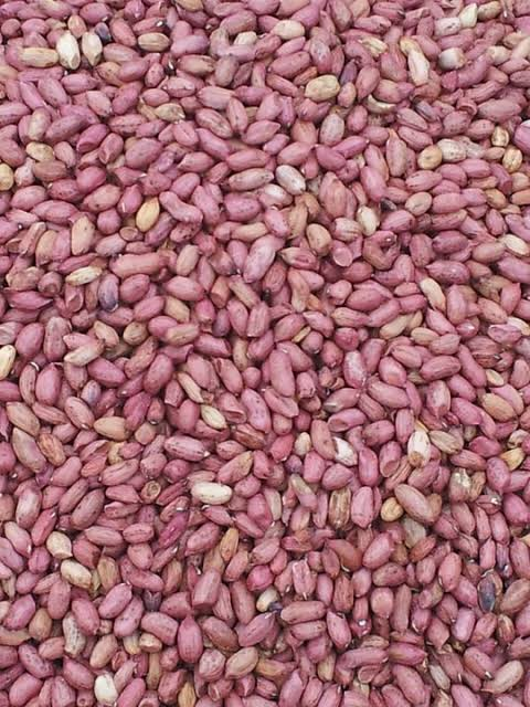 Groundnut business