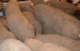 Yam flour production