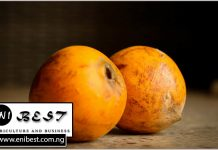 udara agbalomo farming in nigeria