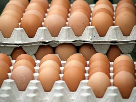 Egg distribution business