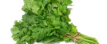 Parsley farming, parsley leaf