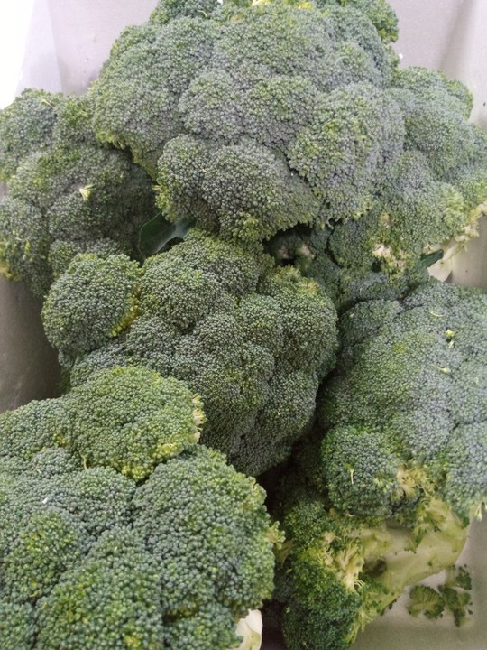 Broccoli farming, vegetable farming